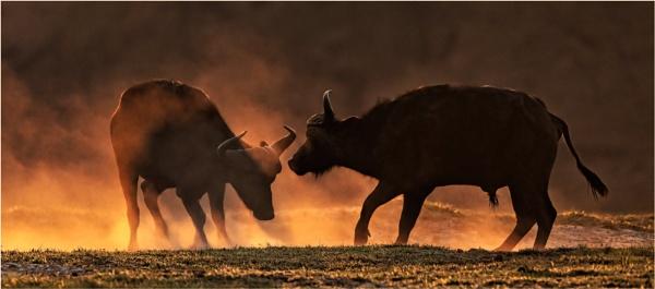 Raging Bulls by mjparmy