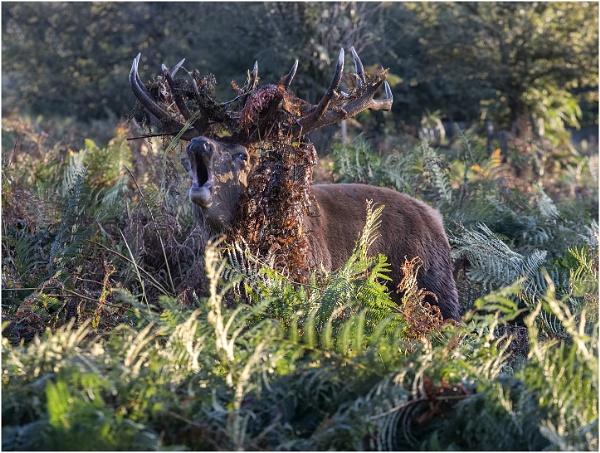 Oh Deer...Like my hat! by Lillian