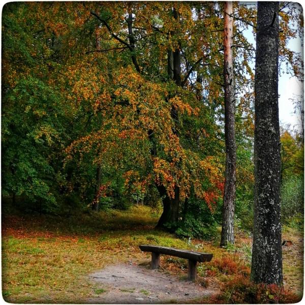 Autumn by papajedi