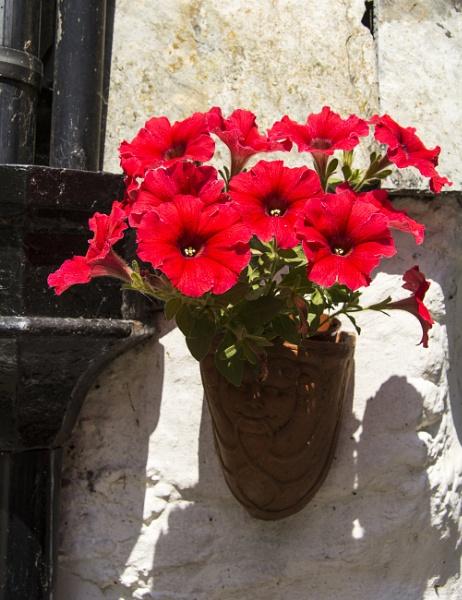 Floral Display by Irishkate