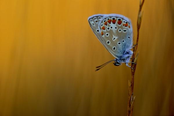 bleu by ruurd