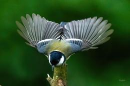 Flight towards the camera