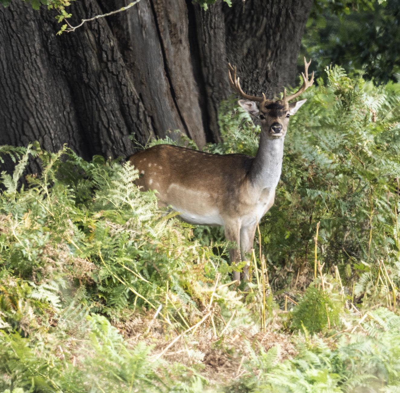'O' Deer 3