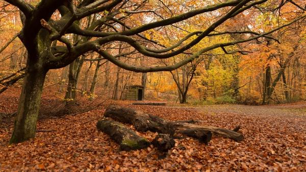 Fallen trees by trusth