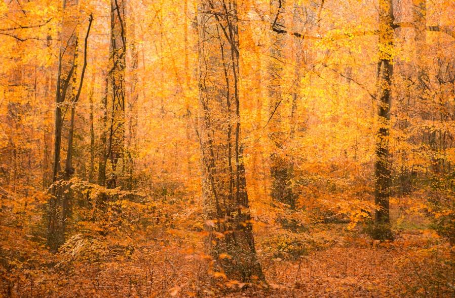 Autumn Multiple Exposure