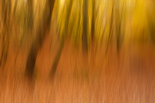 Tree trunks by trusth