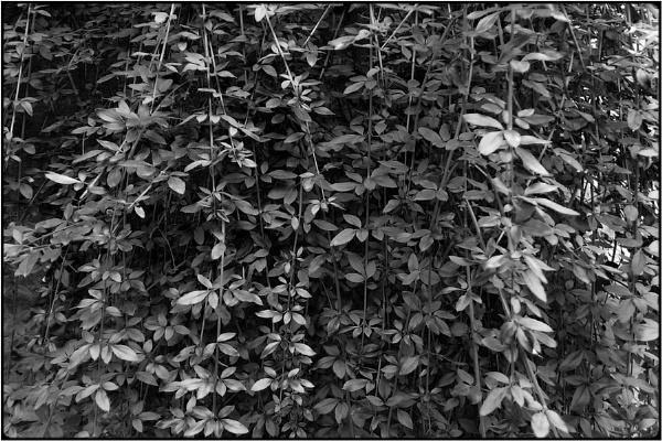 leaf curtain by FabioKeiner