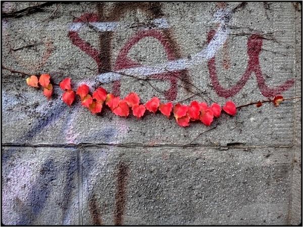 red branch by FabioKeiner