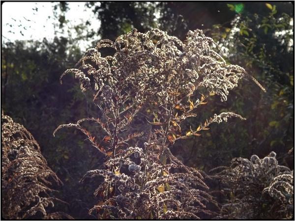 lightweed by FabioKeiner