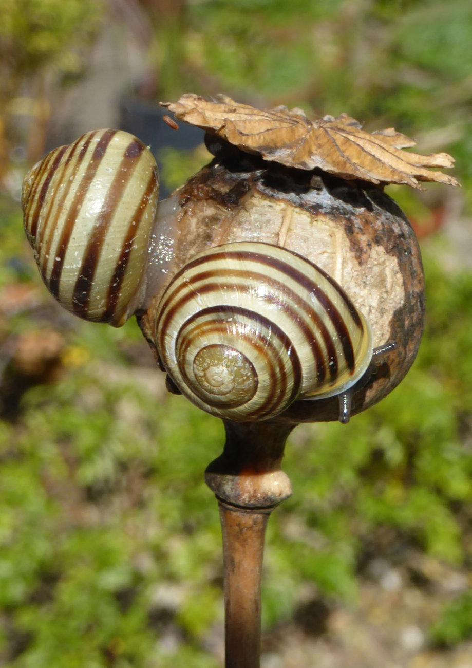 Snails and Pepper-pot