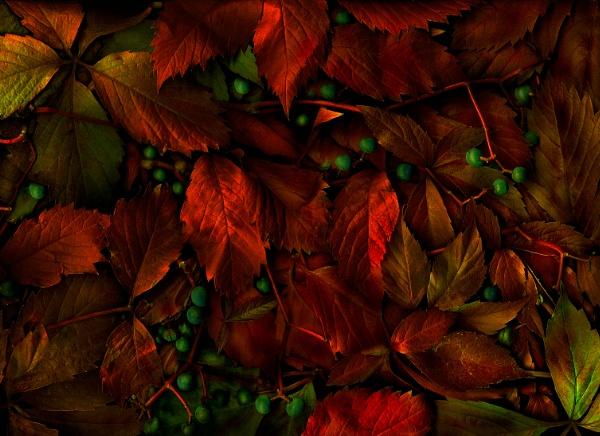 Magic Garden...  Autumn by mtuyb