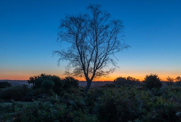 Dawn Silhouette by NickLucas
