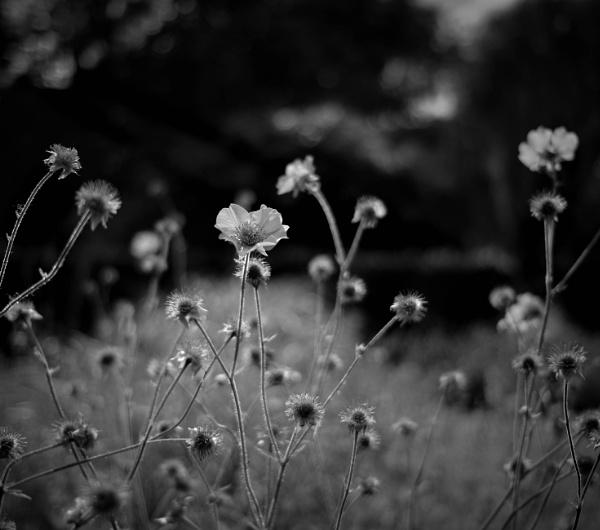Mono flowers by Kilcaff