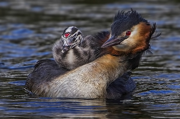 Move  over  mum by TK