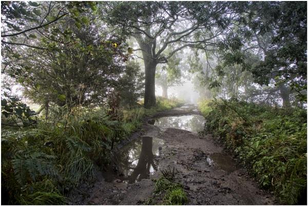 Autumnal Mist by Owdman