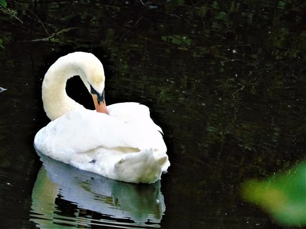 Swan Lake 2 by wsh