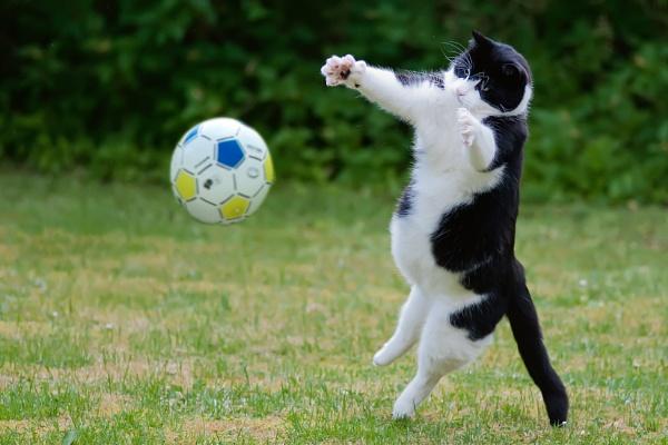 Ballgame by Leikon