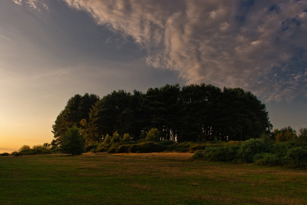 Queens Coppice Twilight by Stephen_B
