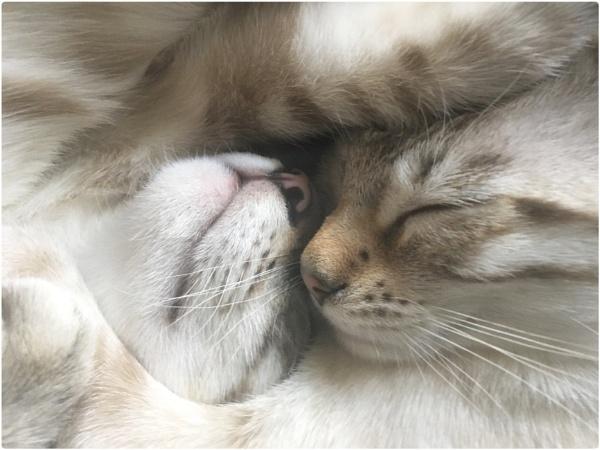 Cuddles by sherlob