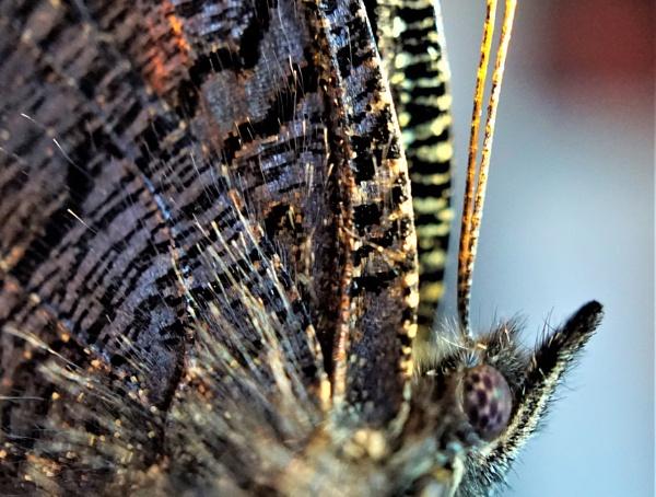 Butterfly by rosej