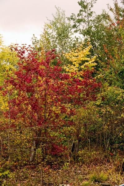 Autumn colours by LinH