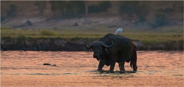 Crossing the Chobe by mjparmy