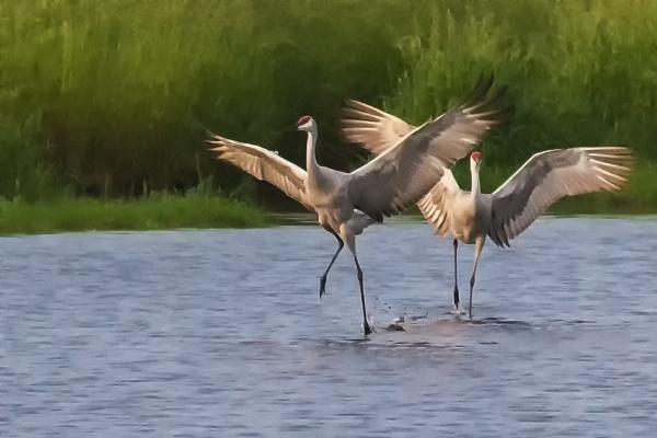 Water dance by jbsaladino