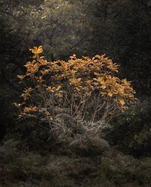 Autumn palette by true