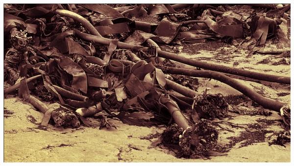 SEAWEED. by kojack