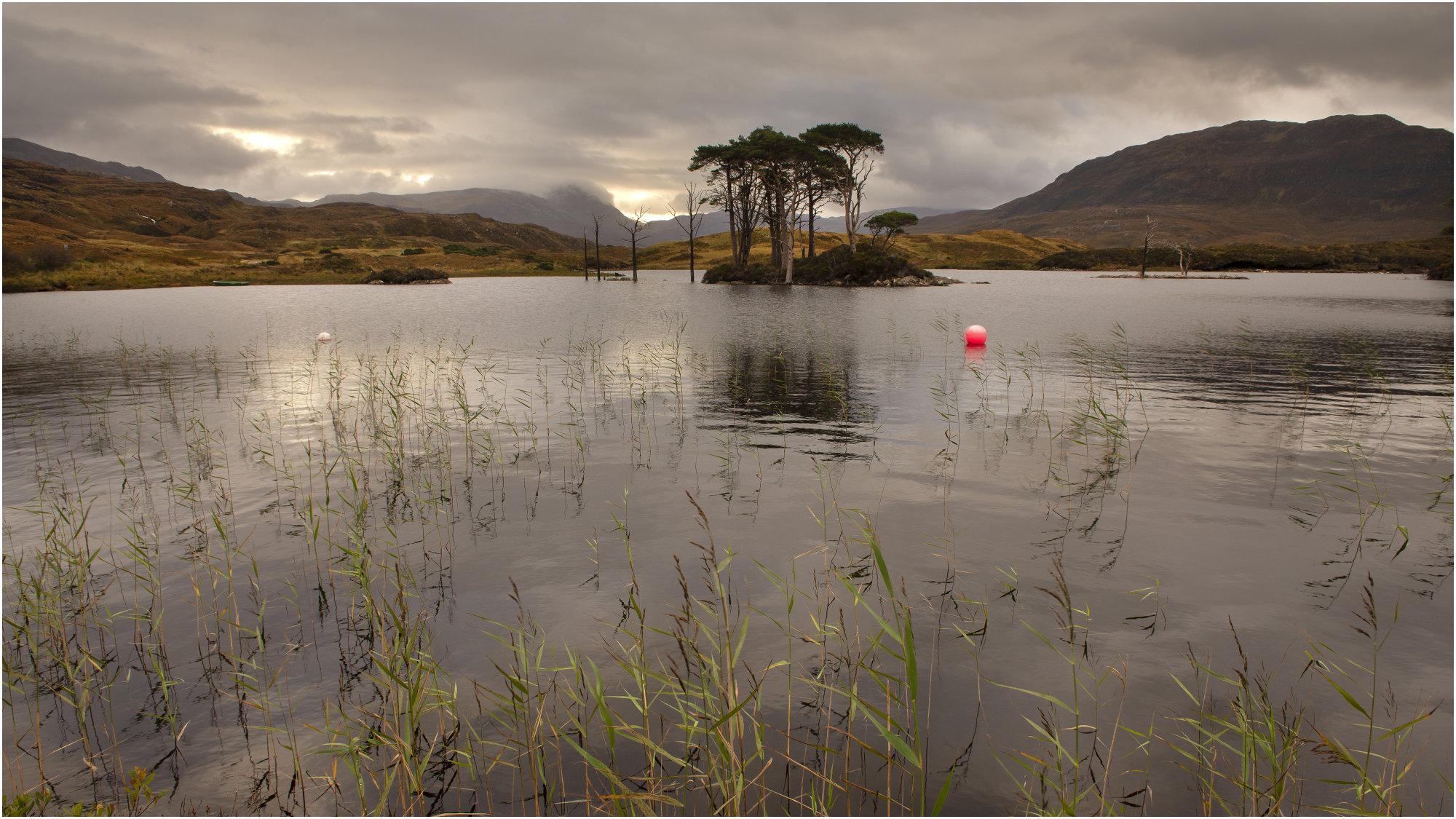 Loch Assynt Pines