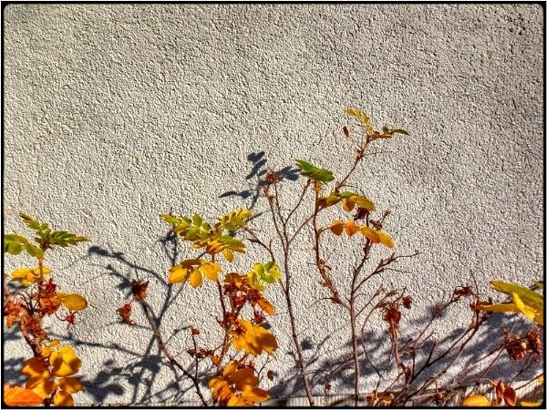 october morning by FabioKeiner