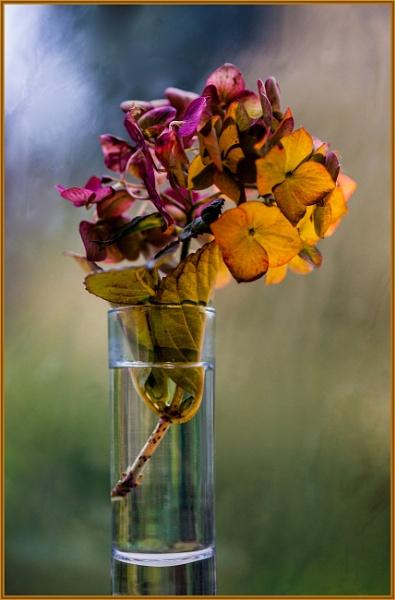 fading autumnal glow... by estonian