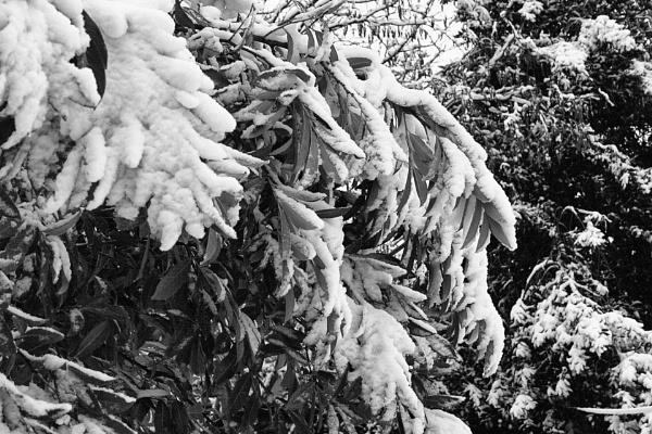 SNOW BUSH by SOUL7