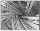 Straws by EddieAC