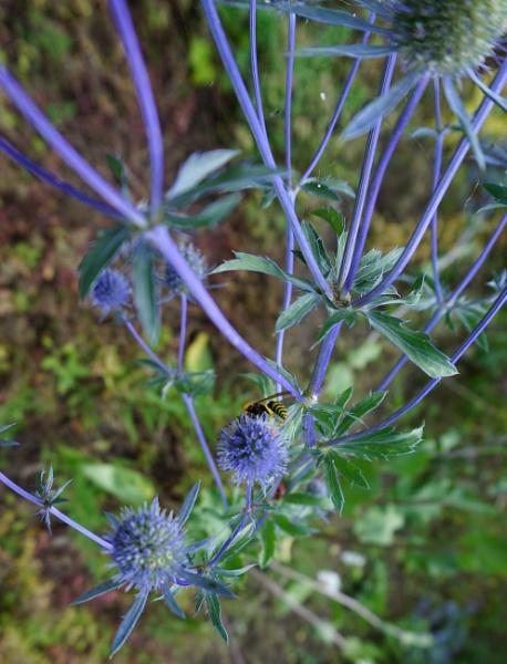 Wasp by SauliusR