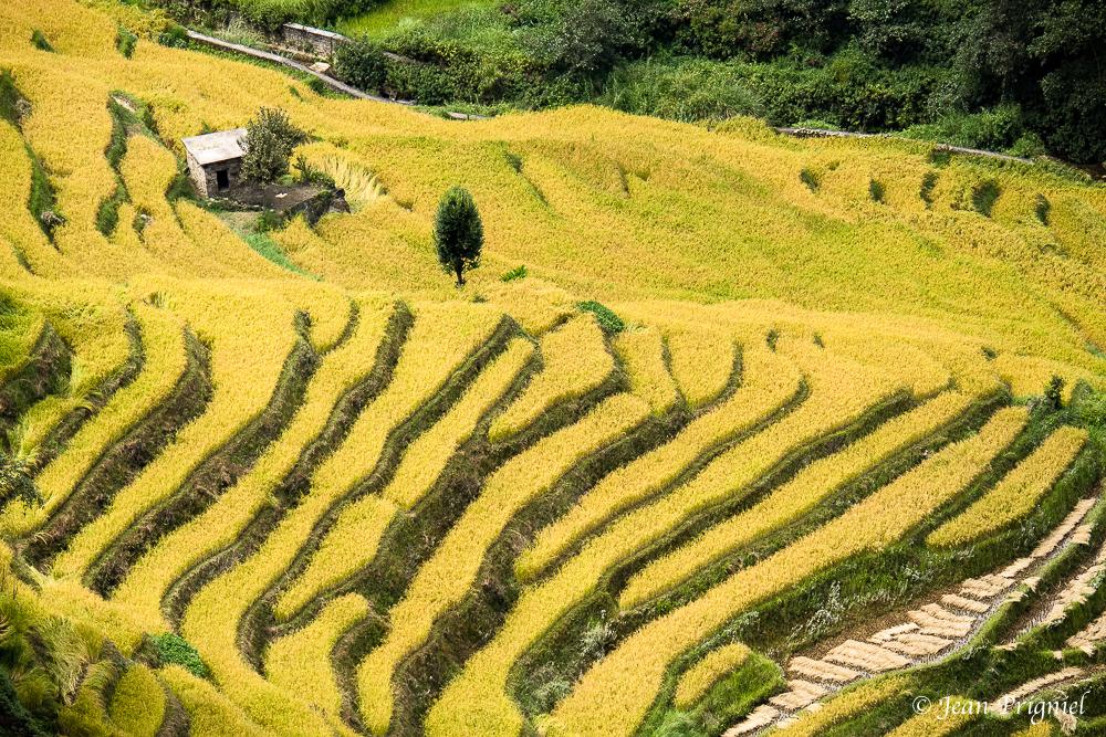 Yunnan région Yuanyang