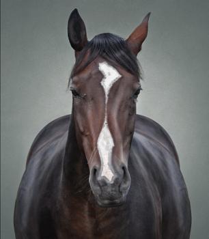 Horse 003