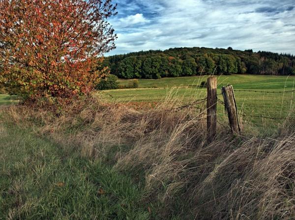 Autumn Walk by kw