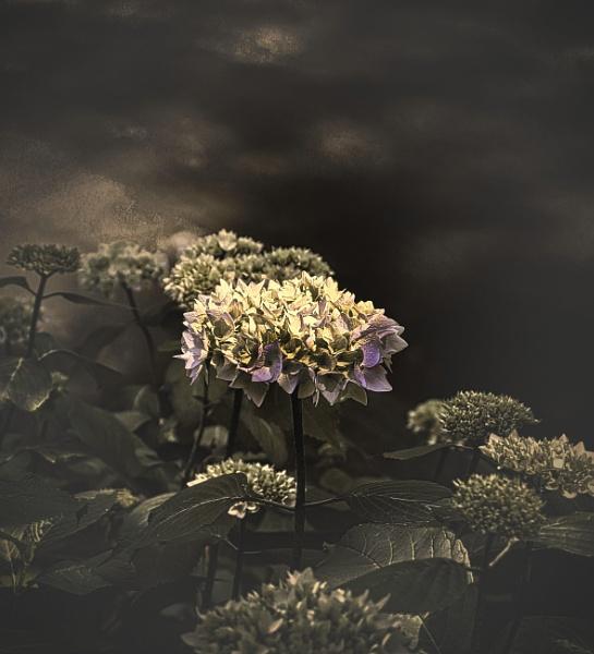 Flora & Foliage by adagio