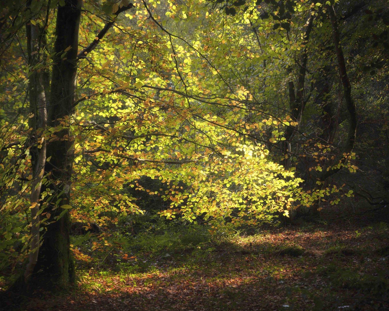Autumnal Colour