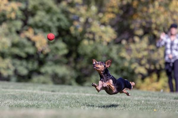 Piper\'s Ball by DBoardman