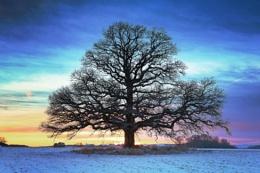 Beautiful tree and winter sunset 3