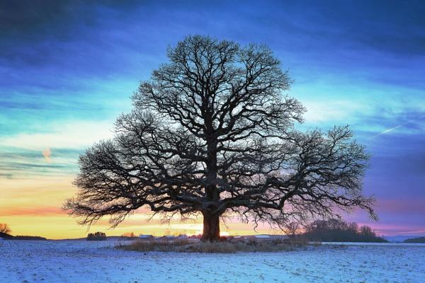 Beautiful tree and winter sunset 3 by Saastad