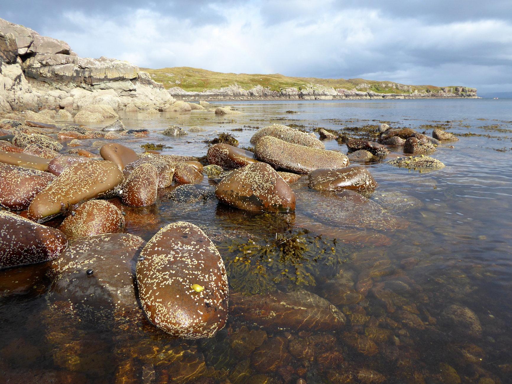 Barnacled Pebbles