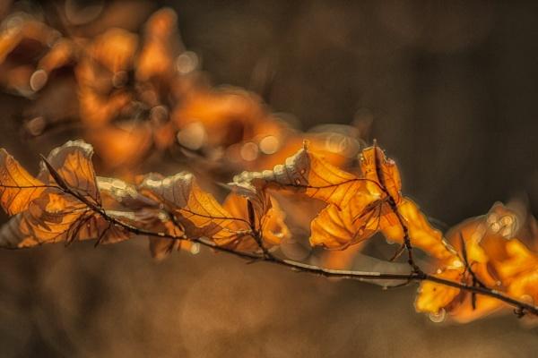 Warm by Leikon