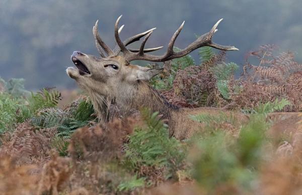 Smile my Deer by AnnetteK