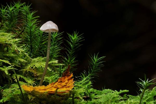 Mushroom and Leaf by viscostatic
