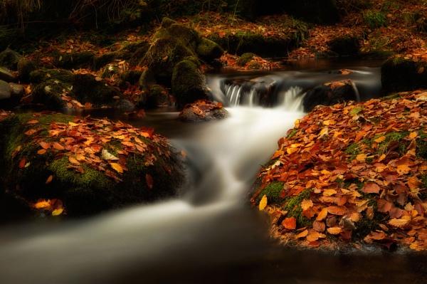 Autumn. by bombolini