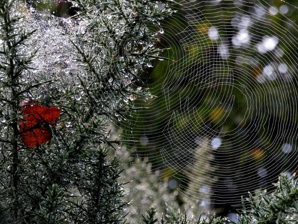 Autumnal web & leaf by SUE118