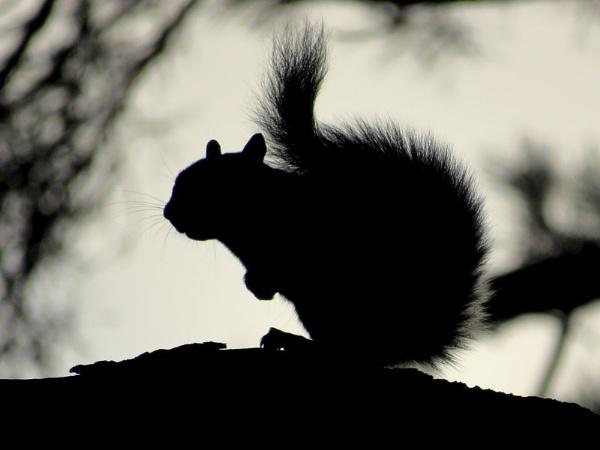 Squirrel by SUE118